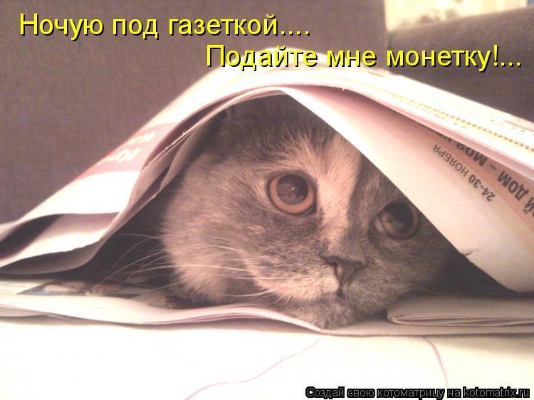 Котоматрица: Ночую под газеткой.... Подайте мне монетку!...