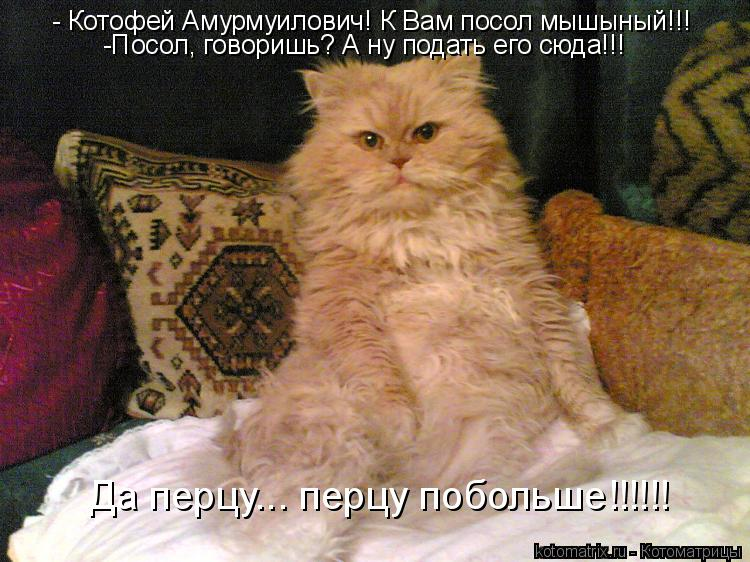 Котоматрица: - Котофей Амурмуилович! К Вам посол мышыный!!! -Посол, говоришь? А ну подать его сюда!!! Да перцу... перцу побольше!!!!!!