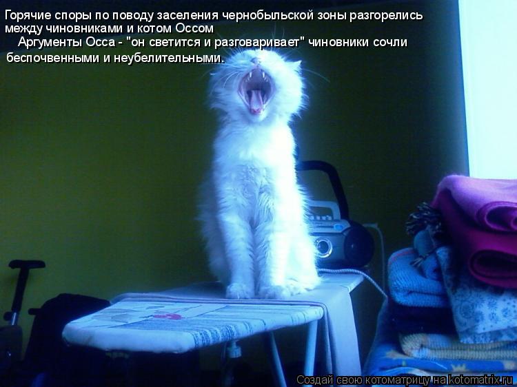"""Котоматрица: Горячие споры по поводу заселения чернобыльской зоны разгорелись между чиновниками и котом Оссом Аргументы Осса - """"он светится и разговари"""