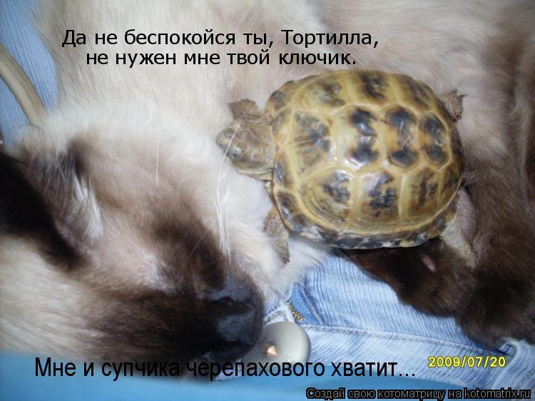 Котоматрица: Да не беспокойся ты, Тортилла,  не нужен мне твой ключик.   Мне и супчика черепахового хватит...