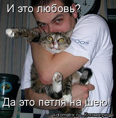 Котоматрица: И это любовь? Да это петля на шею!