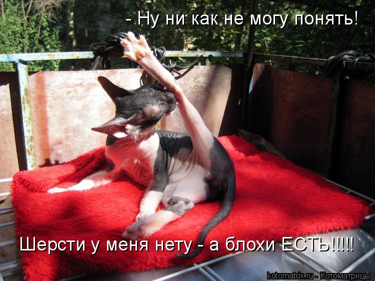 Котоматрица: - Ну ни как не могу понять! Шерсти у меня нету - а блохи ЕСТЬ!!!!!