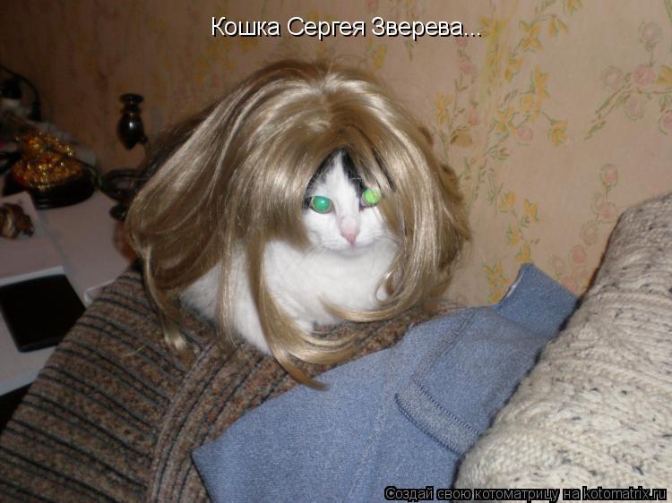 Котоматрица: Кошка Сергея Зверева...