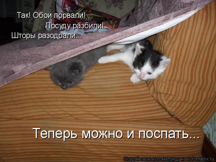 Котоматрица: Так! Обои порвали! Посуду разбили! Шторы разодрали... Теперь можно и поспать...