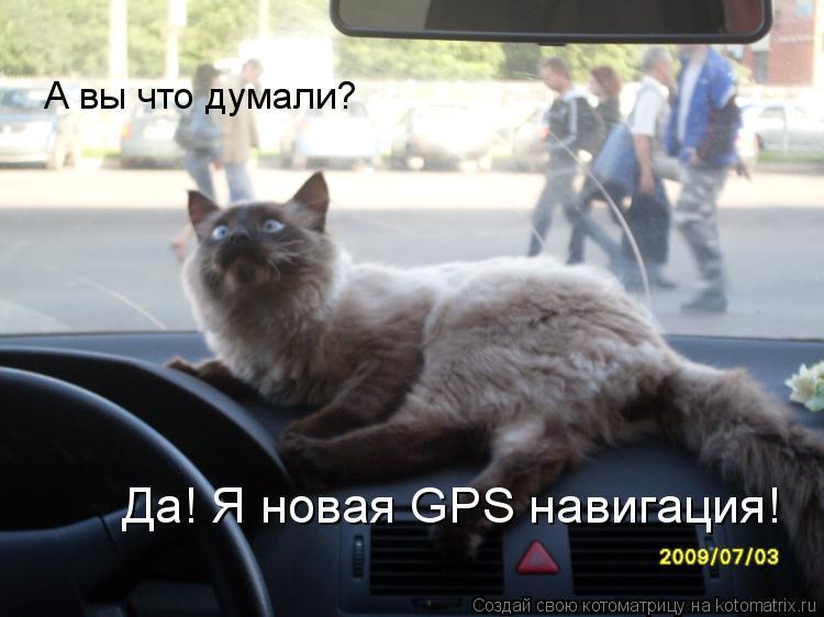 Котоматрица: А вы что думали? Да! Я новая GPS навигация!