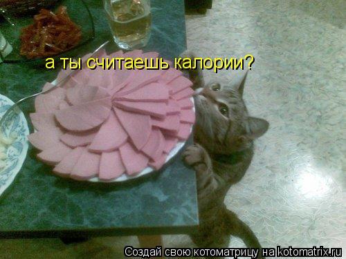 Котоматрица: а ты считаешь калории?