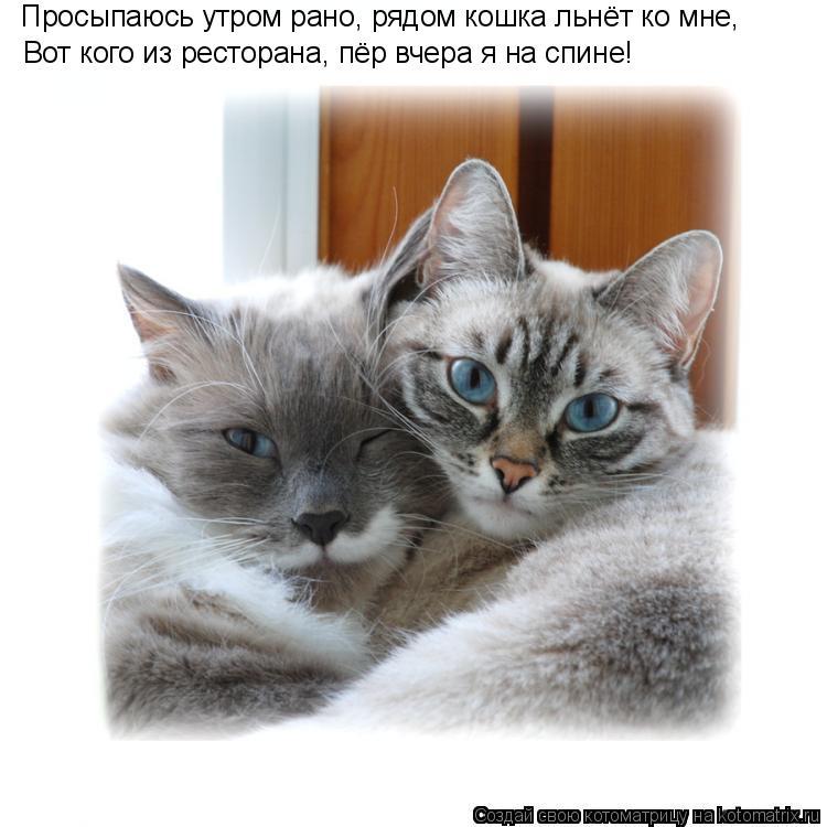 Котоматрица: Просыпаюсь утром рано, рядом кошка льнёт ко мне, Вот кого из ресторана, пёр вчера я на спине!