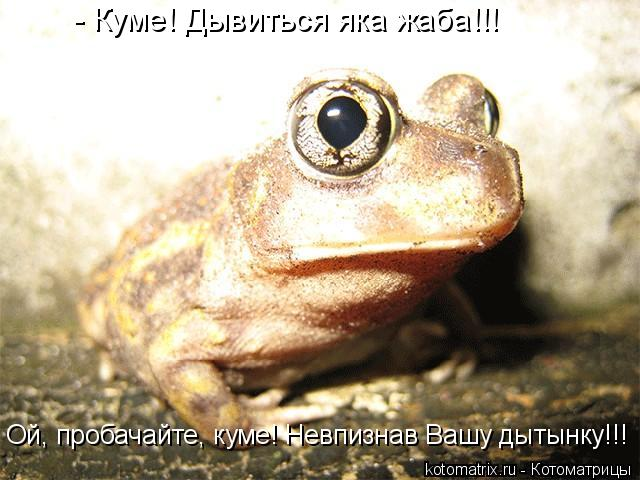 Котоматрица: - Куме! Дывиться яка жаба!!! Ой, пробачайте, куме! Невпизнав Вашу дытынку!!!