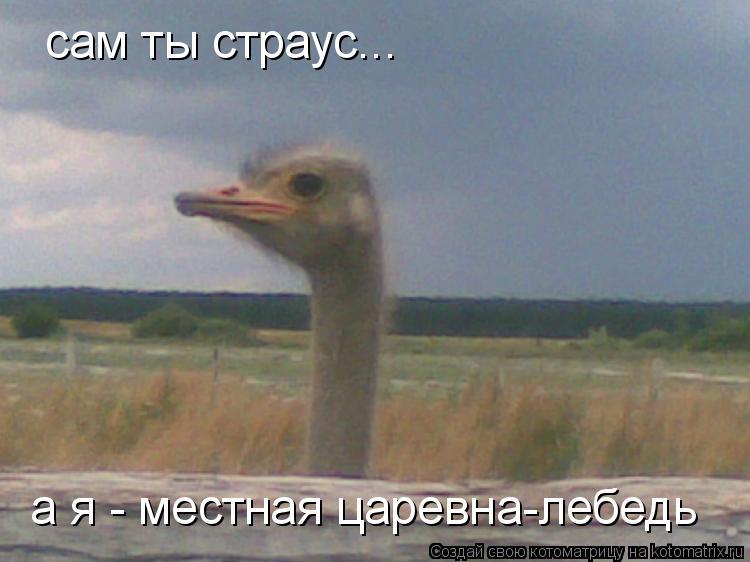Котоматрица: сам ты страус... а я - местная царевна-лебедь