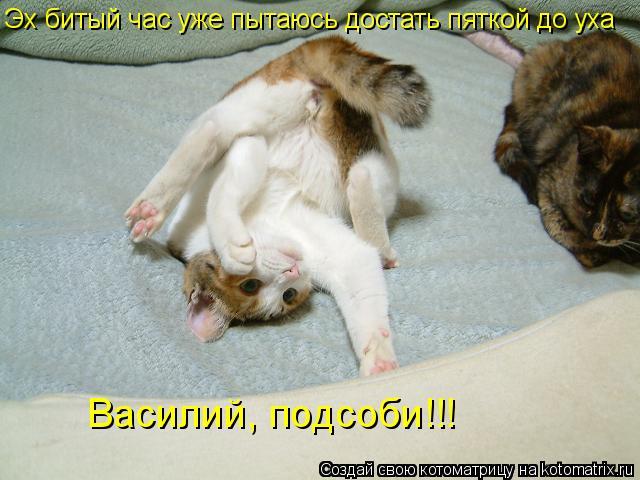 Котоматрица: Эх битый час уже пытаюсь достать пяткой до уха Василий, подсоби!!!