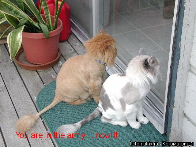 Котоматрица: You are in the army.... now!!!!
