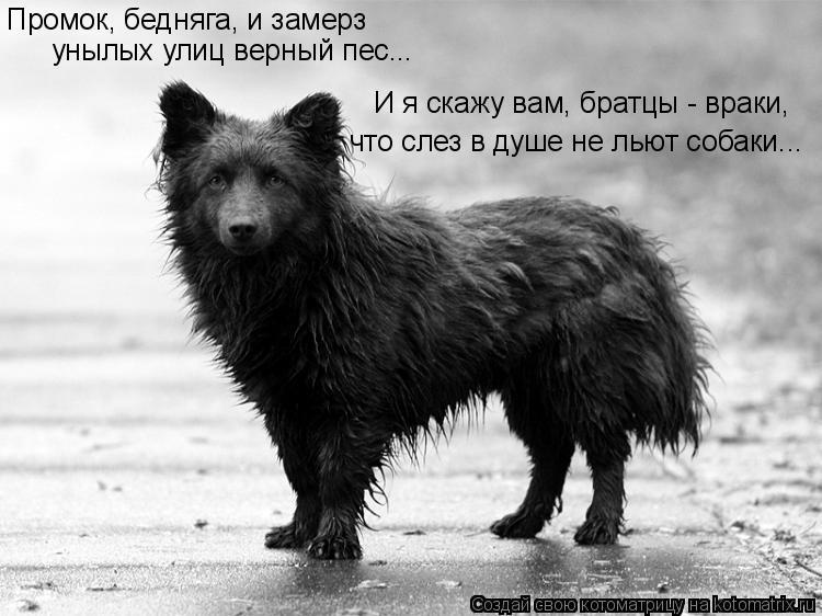 Котоматрица: Промок, бедняга, и замерз унылых улиц верный пес... И я скажу вам, братцы - враки, что слез в душе не льют собаки...