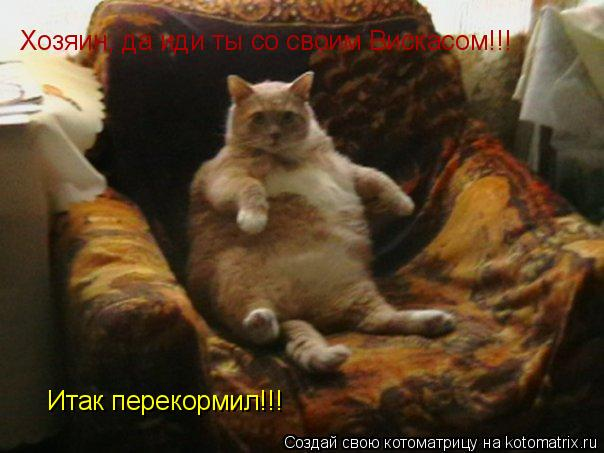 Котоматрица: Хозяин, да иди ты со своим Вискасом!!! Итак перекормил!!!