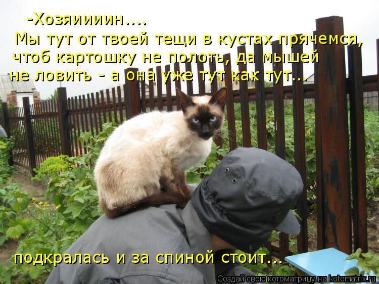 Котоматрица: -Хозяиииин.... Мы тут от твоей тещи в кустах прячемся, чтоб картошку не полоть, да мышей  не ловить - а она уже тут как тут... подкралась и за спин