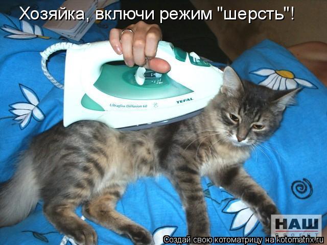 """Котоматрица: Хозяйка, включи режим """"шерсть""""!"""