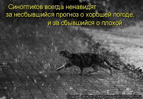 Котоматрица: Синоптиков всегда ненавидят  за несбывшийся прогноз о хорошей погоде, и за сбывшийся о плохой