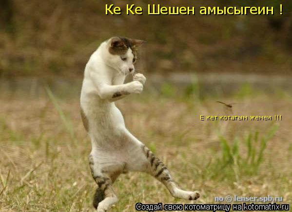 Котоматрица: Ке Ке Шешен амысыгеин ! Е кет котагым жемеи !!!