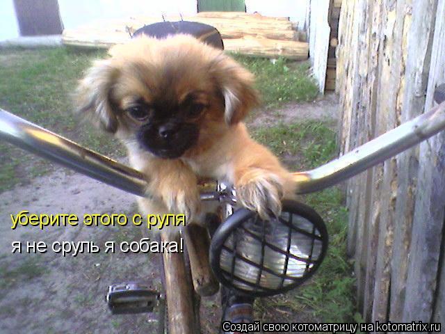 Котоматрица: уберите этого с руля я не сруль я собака!