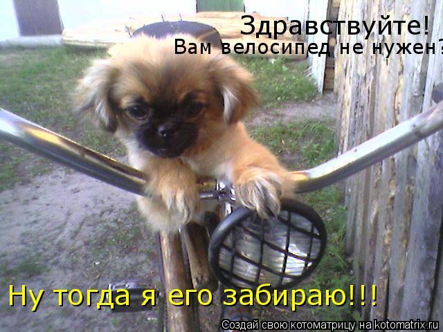 Котоматрица: Здравствуйте! Вам велосипед не нужен? Ну тогда я его забираю!!!