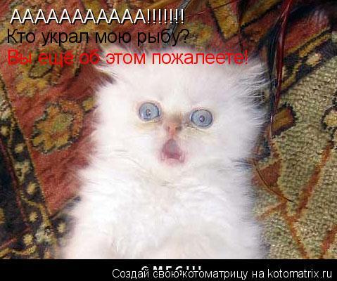 Котоматрица: ААААААААААА!!!!!!! Кто украл мою рыбу? Вы ещё об этом пожалеете!