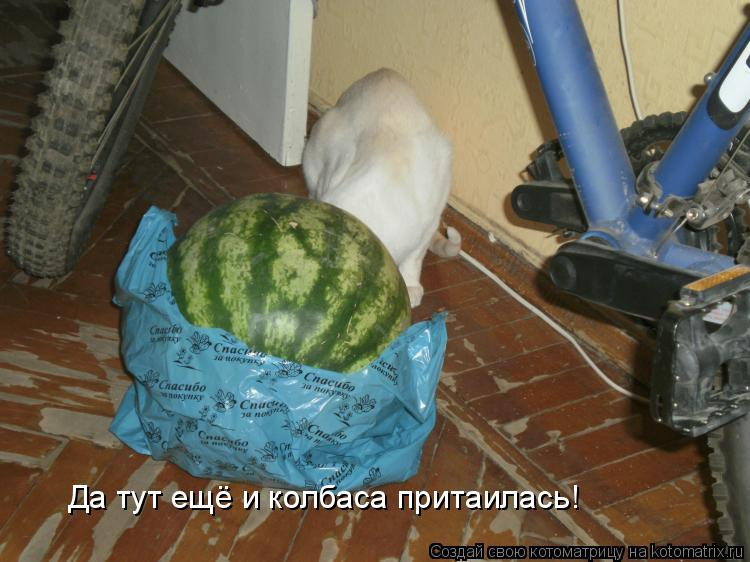 Котоматрица: Да тут ещё и колбаса притаилась!