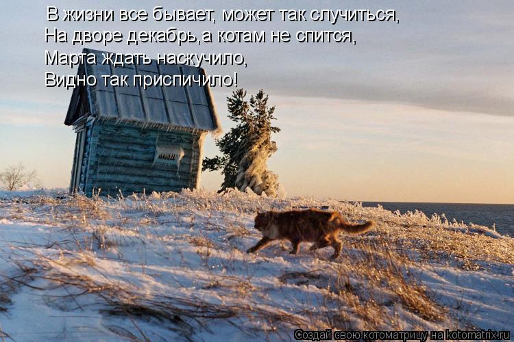 Котоматрица: В жизни все бывает, может так случиться, На дворе декабрь,а котам не спится, Марта ждать наскучило, Видно так приспичило!