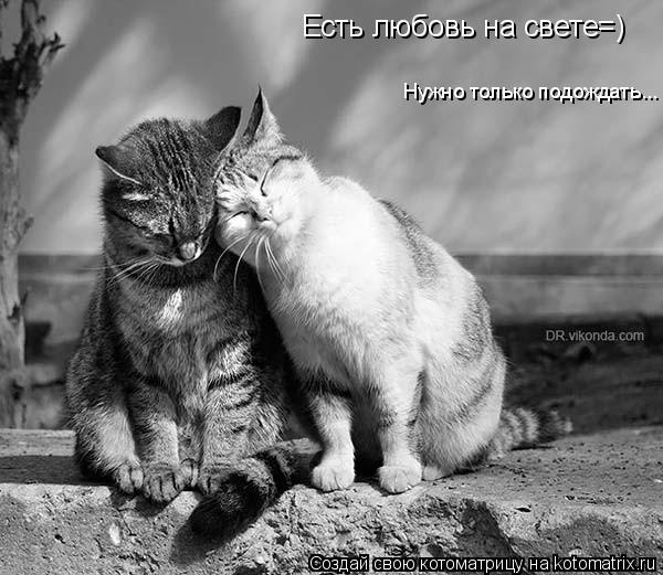 Котоматрица: Есть любовь на свете=) Нужно только подождать...
