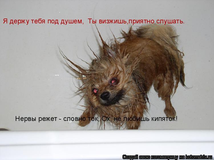 Котоматрица: Я держу тебя под душем,  Ты визжишь,приятно слушать.    Нервы режет - словно ток, Ох, не любишь кипяток!
