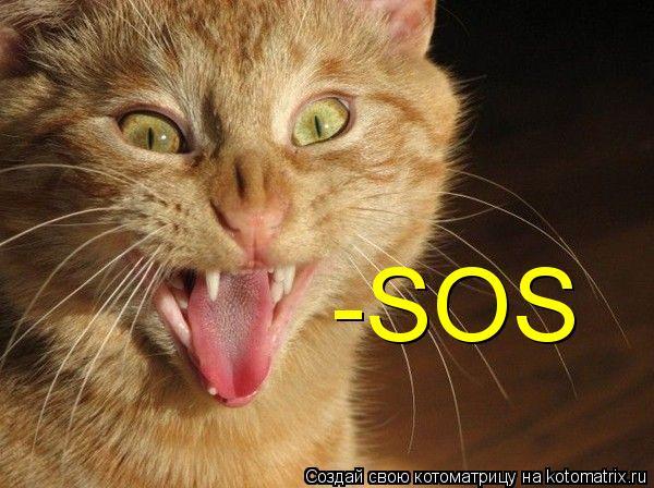 Котоматрица: -SOS