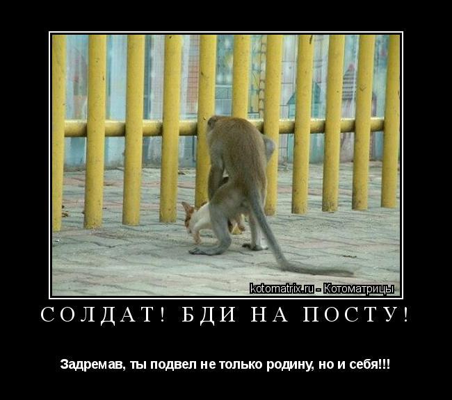 Котоматрица: Солдат! Бди на посту! Задремав, ты подвел не только родину, но и себя!!!
