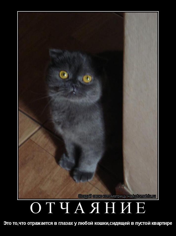 Котоматрица: отчаяние Это то,что отражается в глазах у любой кошки,сидящей в пустой квартире