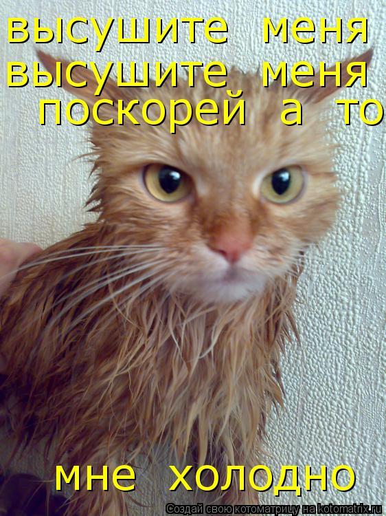 Котоматрица: высушите  меня  поскорей  а  то   мне  холодно высушите  меня  поскорей  а  то   мне  холодно   поскорей  а  то   мне  холодно   мне  холодно