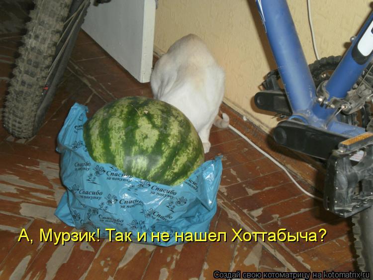 Котоматрица: А, Мурзик! Так и не нашел Хоттабыча?