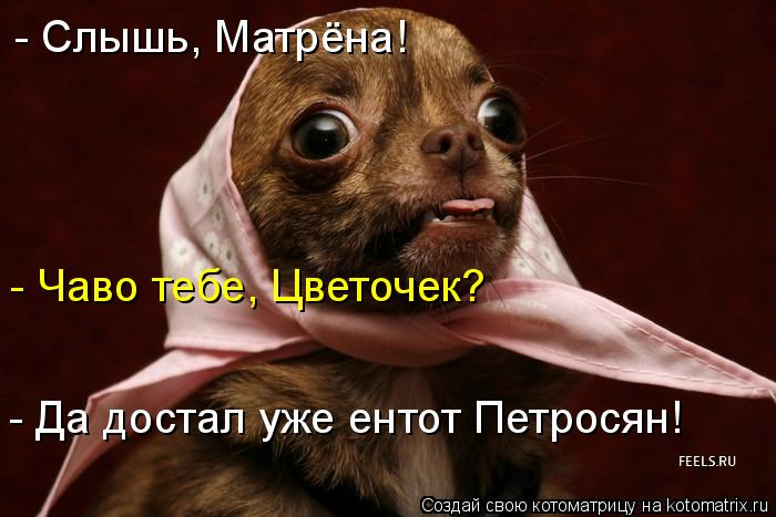 Котоматрица: - Слышь, Матрёна!  - Чаво тебе, Цветочек? - Да достал уже ентот Петросян!