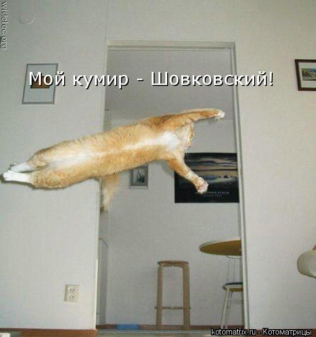 Котоматрица: Мой кумир - Шовковский!