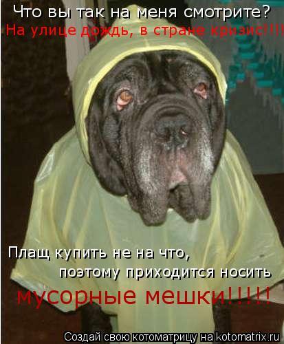 Котоматрица: Что вы так на меня смотрите?  На улице дождь, в стране кризис!!!! Плащ купить не на что, поэтому приходится носить  мусорные мешки!!!!!