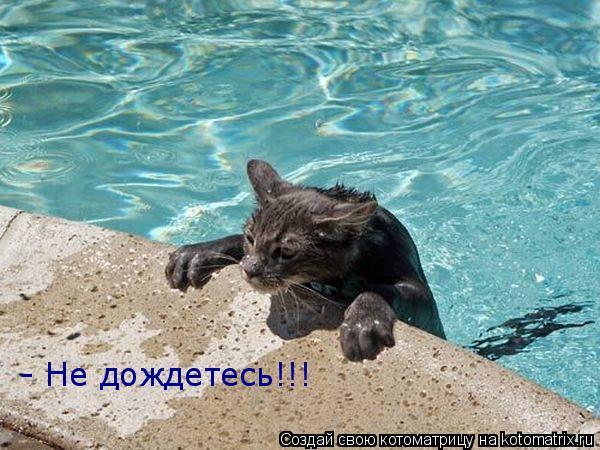 Котоматрица: - Не дождетесь!!!