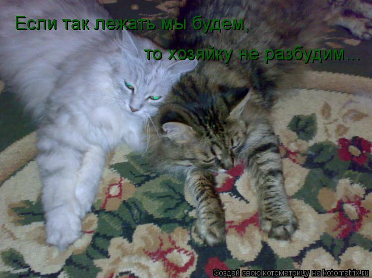 Котоматрица: Если так лежать мы будем, то хозяйку не разбудим...