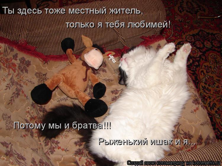 Котоматрица: Ты здесь тоже местный житель, только я тебя любимей! Потому мы и братва!!! Рыженький ишак и я...