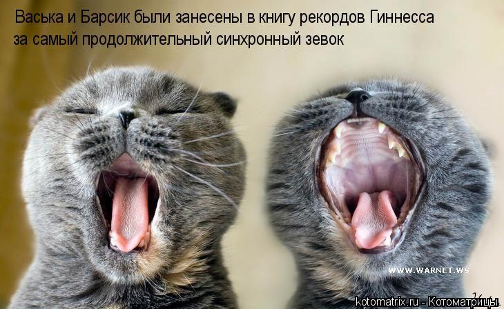 Котоматрица: Васька и Барсик были занесены в книгу рекордов Гиннесса за самый продолжительный синхронный зевок
