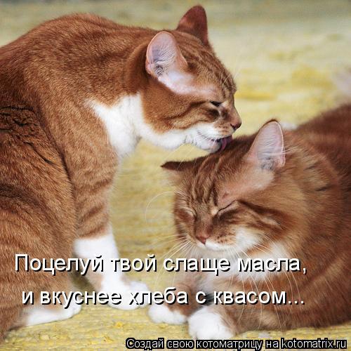 Котоматрица: Поцелуй твой слаще масла, и вкуснее хлеба с квасом...