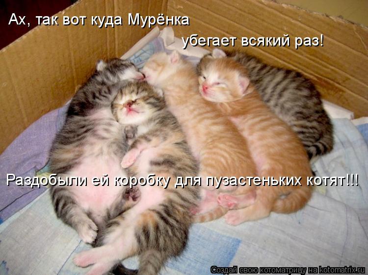 Котоматрица: Ах, так вот куда Мурёнка убегает всякий раз! Раздобыли ей коробку для пузастеньких котят!!!