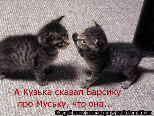 Котоматрица: - А Кузька сказал Барсику про Муську, что она...