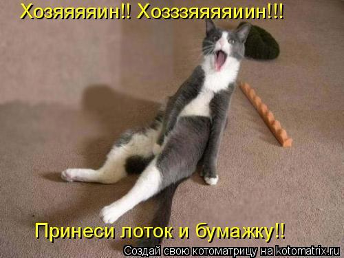 Котоматрица: Хозяяяяин!! Хозззяяяяиин!!! Принеси лоток и бумажку!!