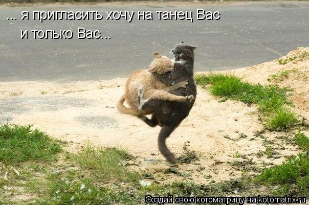Котоматрица: ... я пригласить хочу на танец Вас и только Вас...