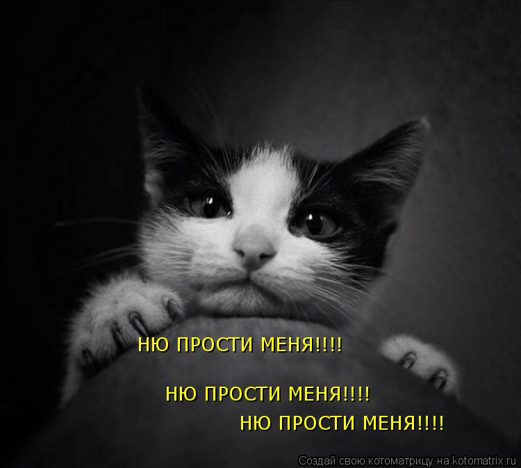 Котоматрица: НЮ ПРОСТИ МЕНЯ!!!! НЮ ПРОСТИ МЕНЯ!!!! НЮ ПРОСТИ МЕНЯ!!!!