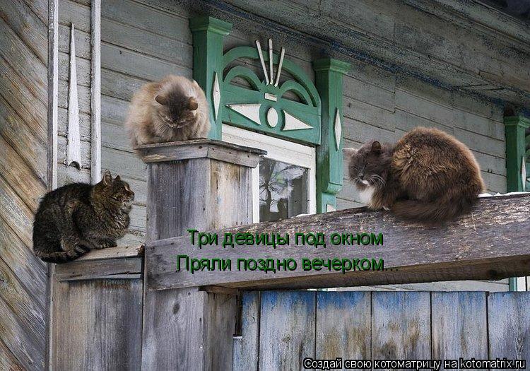 Котоматрица: Три девицы под окном Пряли поздно вечерком...
