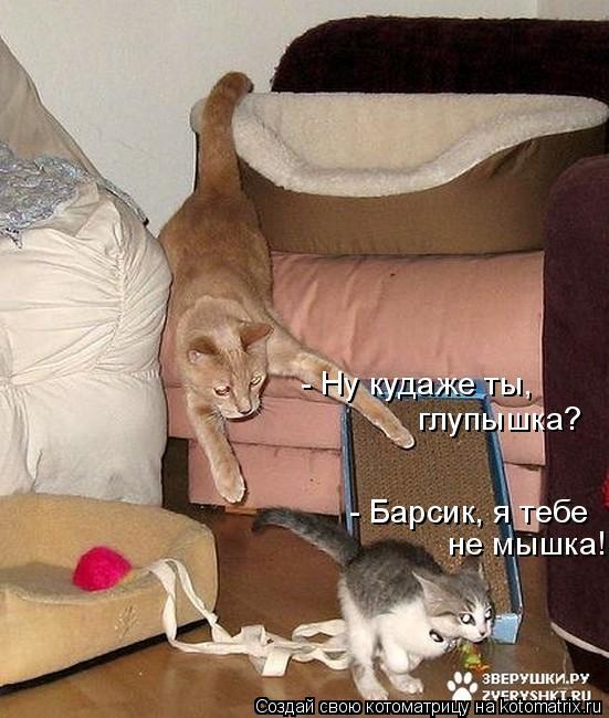 Котоматрица: - Ну кудаже ты,  глупышка? - Барсик, я тебе  не мышка!