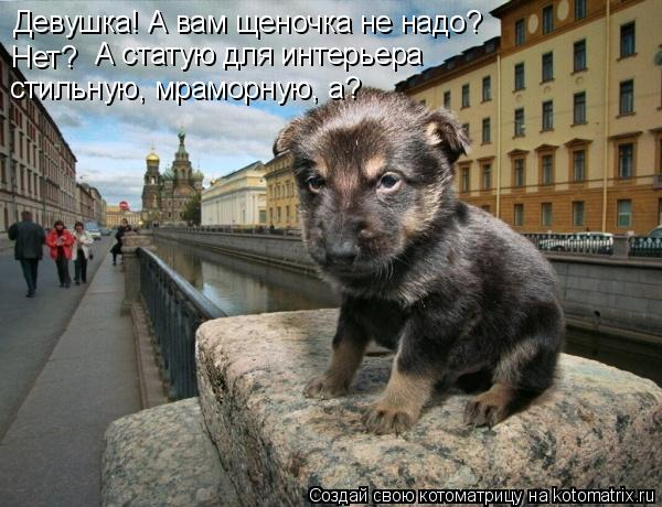 Котоматрица: Девушка! А вам щеночка не надо?  Нет? А статую для интерьера стильную, мраморную, а?