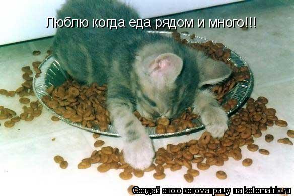 Котоматрица: Люблю когда еда рядом и много!!!